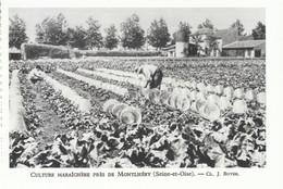1952 - Héliogravure - Montlhéry (Hauts-de-Seine) - La Culture Maraîchère - FRANCO DE PORT - Ohne Zuordnung