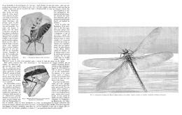 LES INSECTES FOSSILES DES TEMPS PRIMAIRES   1895 (1) - Fossils