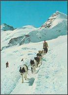 Polarhunde, Jungfraujoch, Bern, C.1970s - Photoglob AK - BE Berne