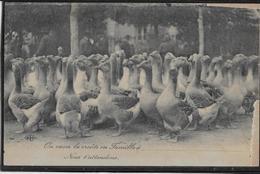 Oies - Oiseaux