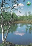 Summer Lake Landscape - Paysage De Lac D'été - WWF Panda Logo - Fleurs, Plantes & Arbres