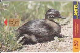 URUGUAY - Bird, Maca(118a), 03/00, Used - Uruguay