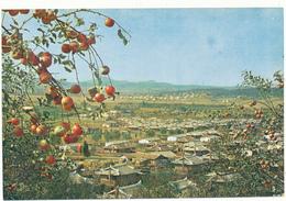 COREE DU NORD - Jardin De Fruits - Korea, North