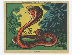 2 Fiches Illustrées Collection Le TIP Les Animaux - Métro