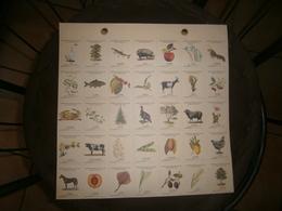 PLANCHE 35 BONS POINT A DETACHER  ANIMAUX FLEURS FRUITS - Vieux Papiers