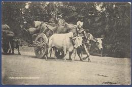 A BULLOCK CART LAHORE PAKISTAN MNH OLD PICTURE POSTCARD POST CARD - Pakistan
