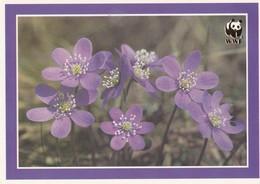 Flowers - Fleurs - Bloemen - Blumen - Fiori - Flores - Hepatica (Anemone Hepatica) - Pro Natura - WWF Panda Logo - Flowers
