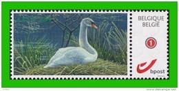 BUZIN - Cygne Tuberculé** ABCP - 2014 - Timbre + Carte De Voeux 2015 - 1985-.. Birds (Buzin)