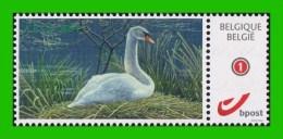 BUZIN - Cygne Tuberculé** ABCP - 2014 - 1985-.. Birds (Buzin)