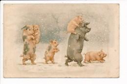 Carte Fantaisie Avec Une Famille De Cohons Cochon ( A & M. B N° 55 )  ( Recto Verso ) - Cochons