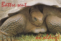 Turtle - Tortue - Zeeschildpad - Schildkröte - Tartaruga - Tortuga - Animal - Animaux - Fauna - Tortues