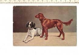 Dieren 128 - Englischer Und Irish Setter - Cani