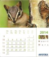 Apotex 201 / Ecureuil Eekhoorn Chipmunk Squirrel - Calendars