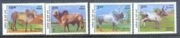 K162- India 2000 Fauna. Breeding Zebus Breeds. - Stamps
