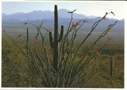 USA Arizona / Cactus - Sukkulenten
