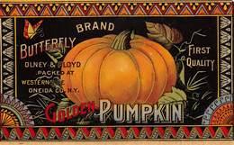 "08497 ""N.Y. ONEIDA - OLNEY & FLOYD PACKED AT - WESTWRNVILLE - GOLDEN PUMPKIN""  I QUARTO XX SEC. ETICHETTA ORIG. - Fruit En Groenten"