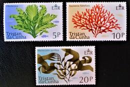 PLANTES MARINES 1975 - NEUFS ** - YT 198/00 - MI 199/01 - Tristan Da Cunha
