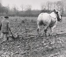 PHOTO   AGRICULTURE SOLOGNE  24 SUR 18 CM  ANNEES 70 - Beroepen