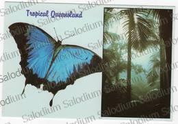 AUSTRALIA - Air Mail - Tropical Rainforest Butterfly Farfalla - Storia Postale - Australia