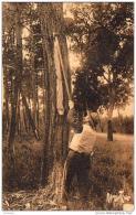 D33  ARCACHON  Forêt D' Arcachon- L' Incision Des Pins Maritimes Pour Recueillir La Résine  ..... - Arcachon