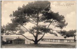 D33  ARCACHON  Le Grand Pin Du Moulleau  ..... - Arcachon