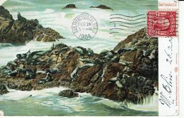 USA-SAN FRANCISCO- SEALS ON SEAL ROCKS - San Francisco