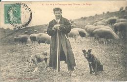 89 LA VIE A LA CAMPAGNE DANS L YONNE _ LE BERGER ET SES DEUX CHIENS_  POSTEE A SORMERY - Other Municipalities