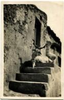 Italie / Italia Sicile Sicilia Taormina Maison Avec Une Chèvre - Italia