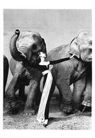 "Richard AVEDON-  PHOTOGRAPHE -""DOVIMA WHIT ELEPHANTS - DRESS BY DIOR - 1955"" - BELLE EDITION ARTISTIQUE FOTOFOLIO -TB - Illustratori & Fotografie"