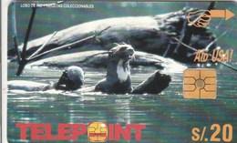 Peru - Lobo Del Rio - Otter - Peru