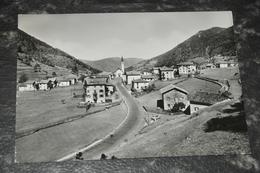 3088  Brusago Pine - 1964 - Trento