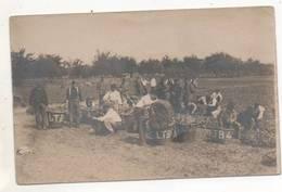 39181  -  Harderwijk   Camp  Internement   Belgische  Groentenweekerij   -  Carte  Photo  2 Scans - Harderwijk