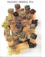 Tisanes / Herbal Tea - Plantes Médicinales