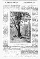 """LES ARBRES EXTRAORDINAIRE  """" LE CHENE DES PARTISANS Prés De  MARTIGNY-LES-BAINS """"   1895 - Lorraine - Vosges"""