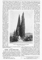 """ARBRES EXTRAORDINAIRE """"  LES CYPRES De SCHIO Prés De VICENCE   ( VENETIE )""""  1895 - Italy"""