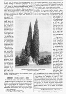 "ARBRES EXTRAORDINAIRE ""  LES CYPRES De SCHIO Prés De VICENCE   ( VENETIE )""  1895 - Italia"