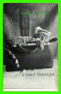 CATS, CHATS -  A TIRED TRAVELER - TRAVEL IN 1907 - P. S. & CO - SERIE 102 No 13 - - Chats