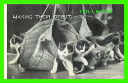 CATS, CHATS - MAKING THEIR DEBUT - TRAVEL IN 1907 - P. S. & CO - SERIE 102 No 16 - - Chats