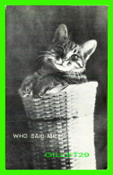 CATS, CHATS - WHO SAID MICE ? - TRAVEL IN 1907 - P. S. & CO - SERIE 102 No 12 - - Chats