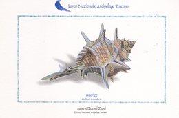 Parco Nazionale Arcipelago Toscano - Murice - - Pesci E Crostacei