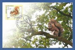 Kroatien / Hrvatska  2003 , Fauna - Eichhörnchen - Maximum Card - First Day Zagreb  5.6.2003 - Kroatië