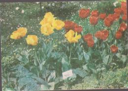 CALENDARS - ROMANIA 1987  Red Cross - Croix Rouge -Rotes Kreuz  - FLOWERS  (7 X 10 Cm) -2 Scans - Calendarios