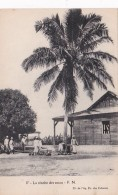 French Equatorial Africa La recolte des cocos