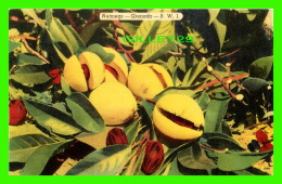 GRENADA - NUTMEGS - - Grenada