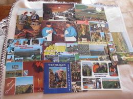 LOT DE 12 CARTES VENDANGES EN CHAMPAGNE ...VIGNES.... - Cartes Postales