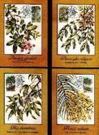 CISKEI, 1984 , Indiginous Trees,  Mint Maxicards, Nr(s.) 6-9 - Ciskei