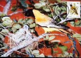 CISKEI, 1984 , Bird 11 Cent,  Mint Maxicards, Nr(s.) 10 - Ciskei