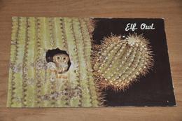 4003- Elf Owl, Smalest Owl In The World - Oiseaux