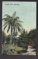 """CPA BERMUDES - BERMUDA - """" Gru-Gru Palm """" - TB PLAN ARBRE REMARQUABLE Jardin Luxueux + Maison Palmier - Bermudes"""