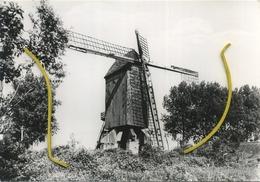 Lembeke :  De Molen  -  Windmolen  (  Grand Format 15 X 10 Cm ) - Kaprijke